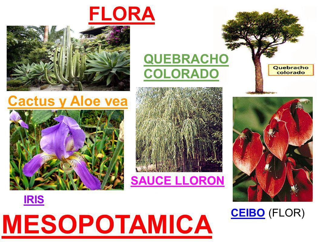 MESOPOTAMICA FLORA Cactus y Aloe vea QUEBRACHO COLORADO SAUCE LLORON