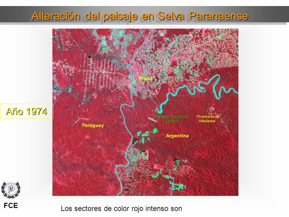 Alteración del paisaje en Selva Paranaense