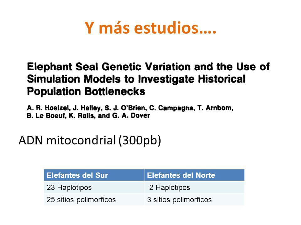 Y más estudios…. ADN mitocondrial (300pb) Elefantes del Sur