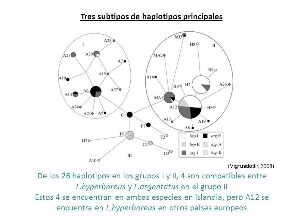 Tres subtipos de haplotipos principales (Vigfusdottir, 2008) De los 26 haplotipos en los grupos I y II, 4 son compatibles entre L.hyperboreus y L.argentatus en el grupo II Estos 4 se encuentran en ambas especies en Islandia, pero A12 se encuentra en L.hyperboreus en otros paises europeos
