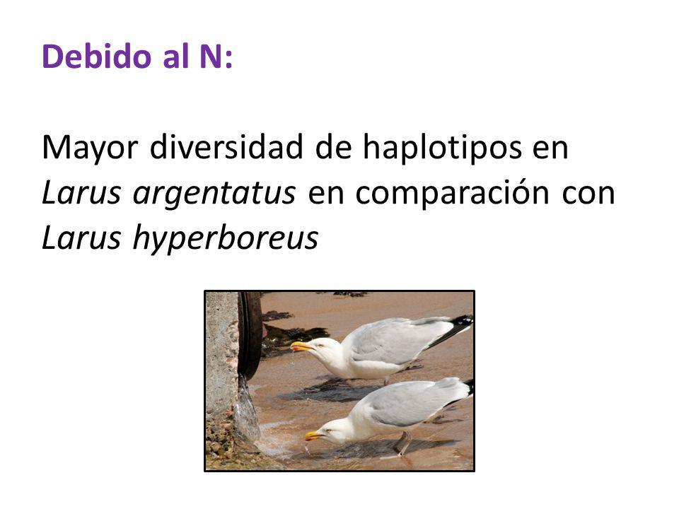 Debido al N: Mayor diversidad de haplotipos en Larus argentatus en comparación con Larus hyperboreus