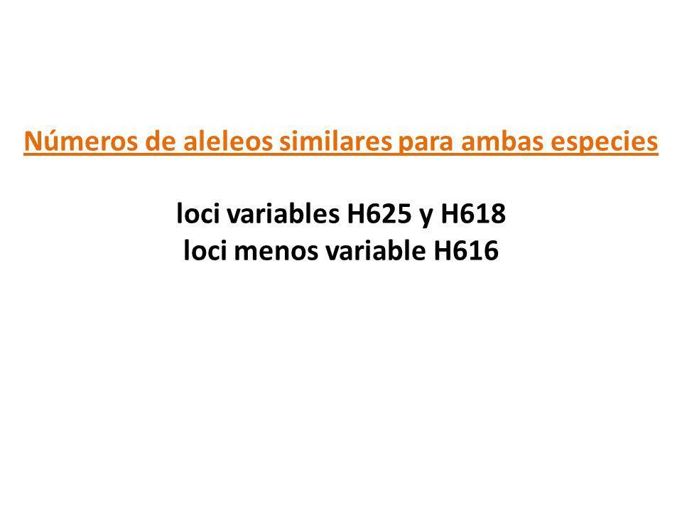 Números de aleleos similares para ambas especies loci variables H625 y H618 loci menos variable H616