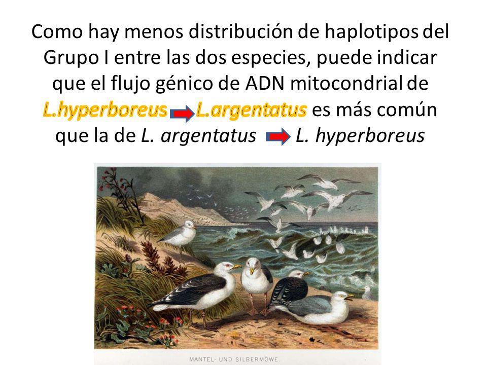 Como hay menos distribución de haplotipos del Grupo I entre las dos especies, puede indicar que el flujo génico de ADN mitocondrial de L.hyperboreus L.argentatus es más común que la de L.