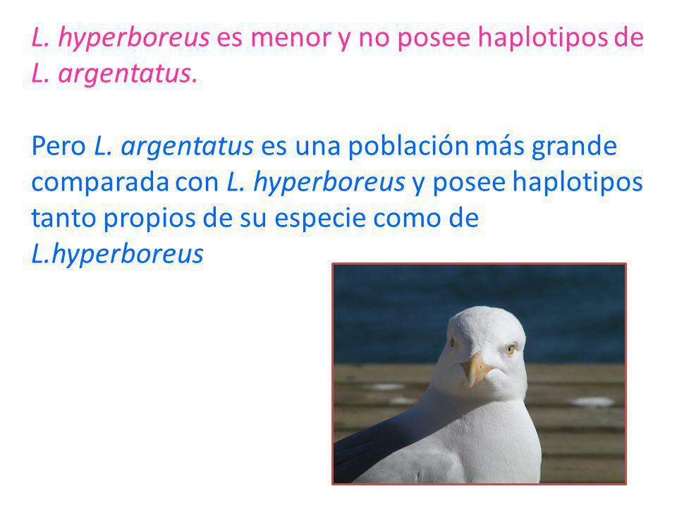 L. hyperboreus es menor y no posee haplotipos de L. argentatus. Pero L