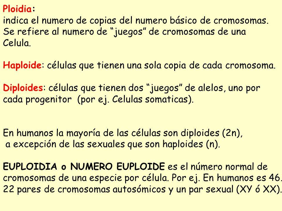 Ploidia: indica el numero de copias del numero básico de cromosomas. Se refiere al numero de juegos de cromosomas de una.