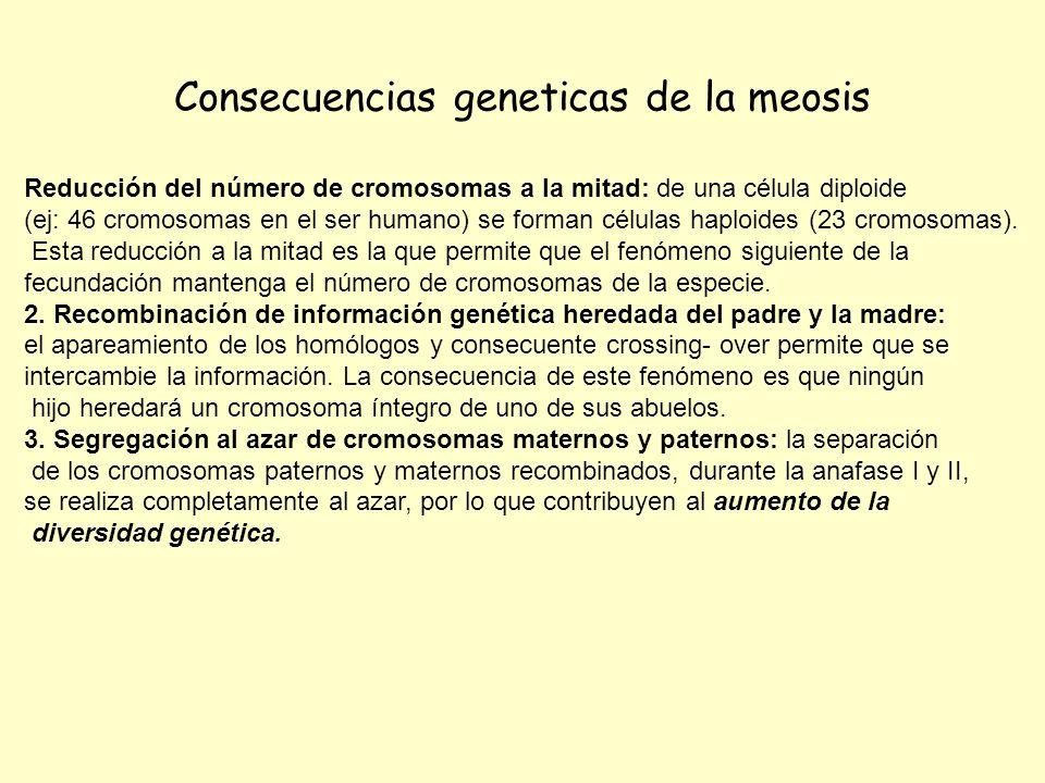 Consecuencias geneticas de la meosis