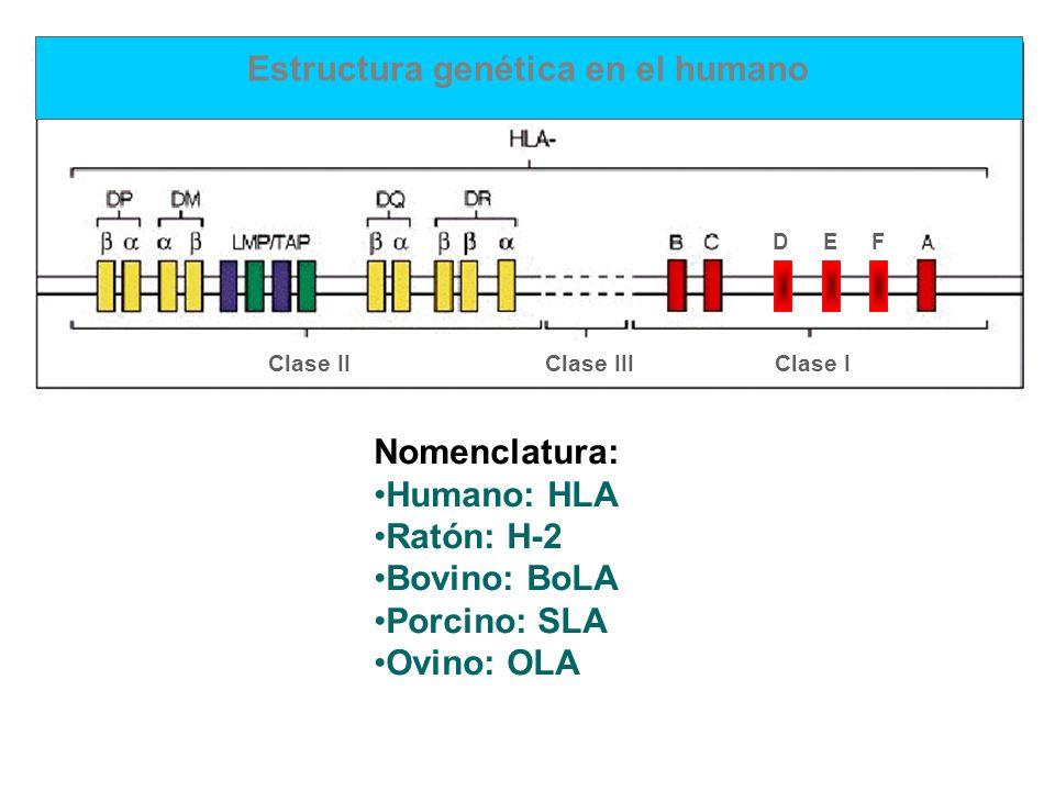 Estructura genética en el humano