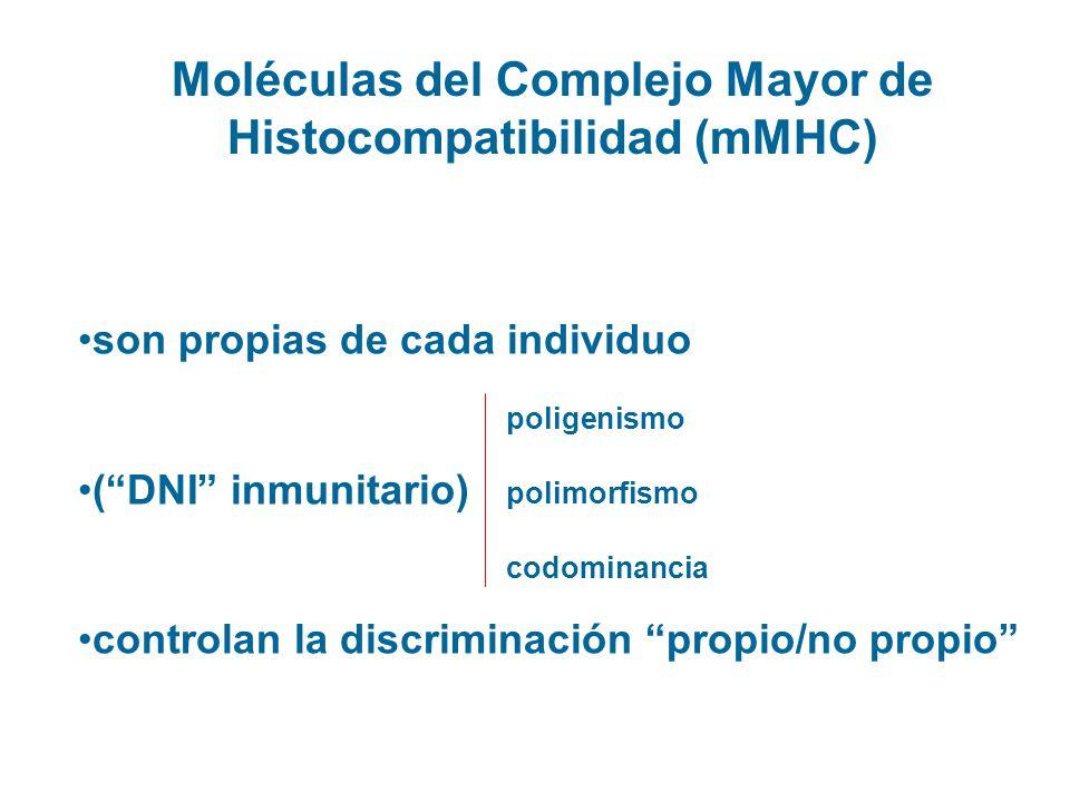 Moléculas del Complejo Mayor de Histocompatibilidad (mMHC)