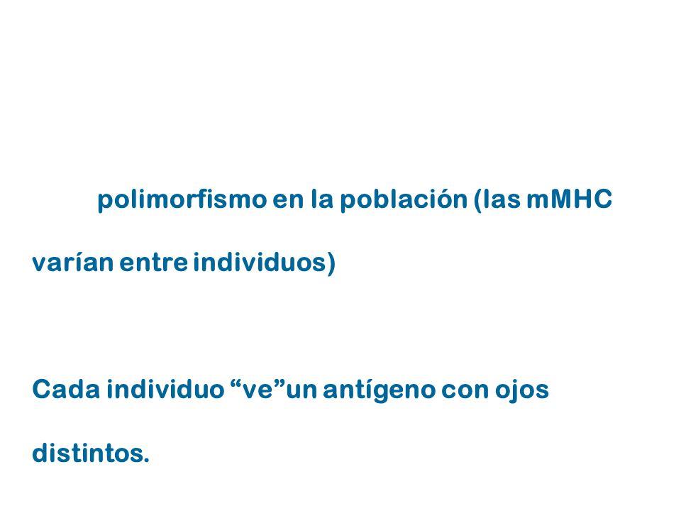 gran polimorfismo en la población (las mMHC varían entre individuos)