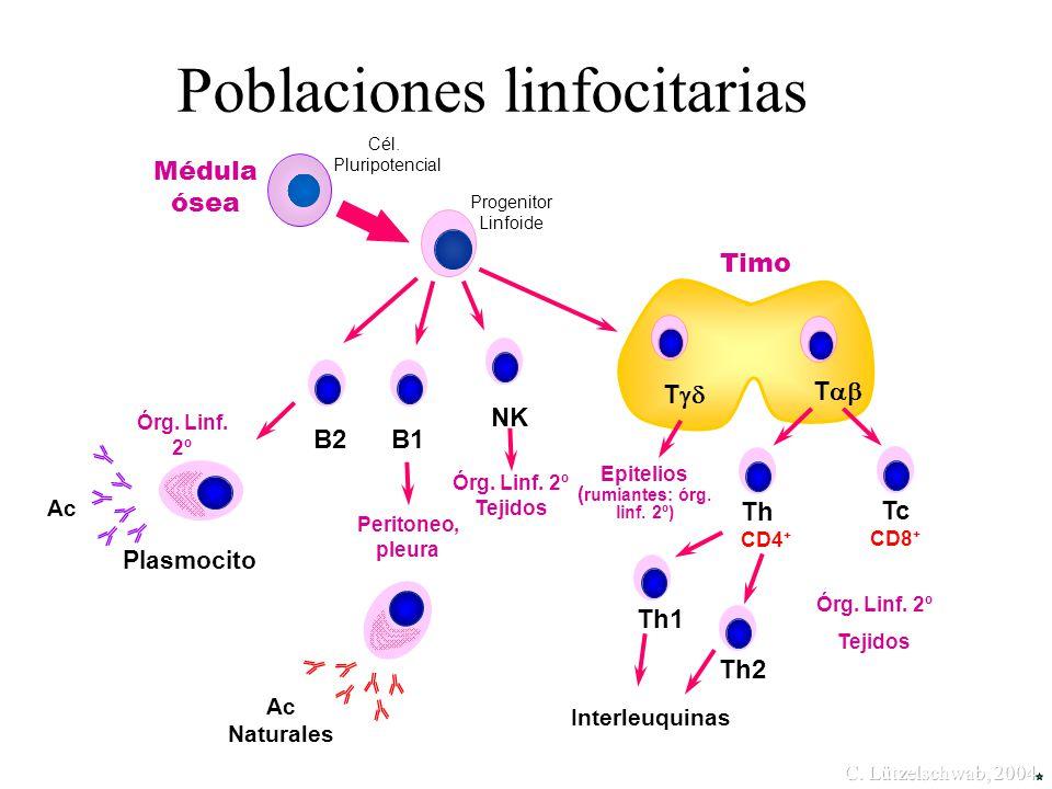Poblaciones linfocitarias