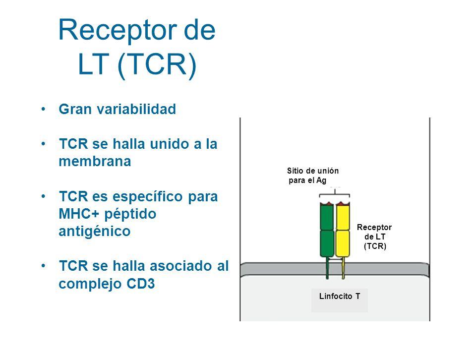 Receptor de LT (TCR) Gran variabilidad