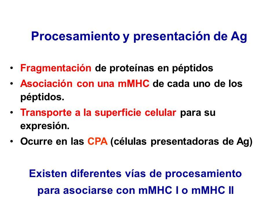 Procesamiento y presentación de Ag