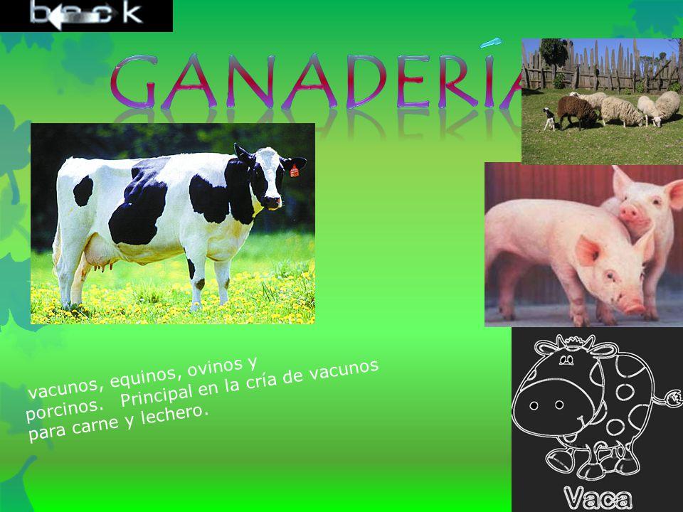 Ganadería vacunos, equinos, ovinos y porcinos. Principal en la cría de vacunos para carne y lechero.
