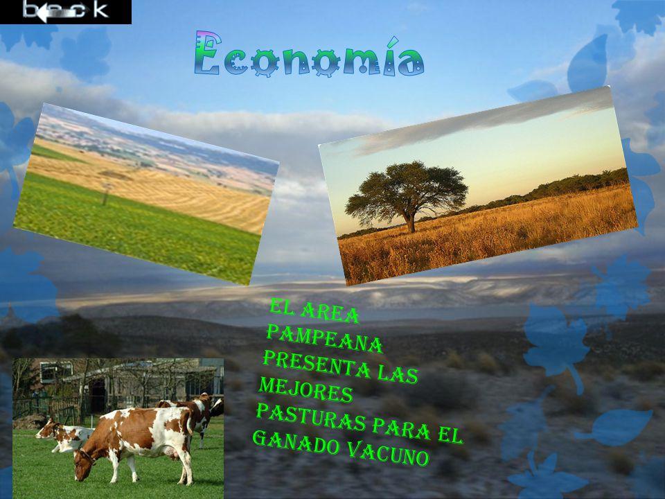 Economía El area pampeana presenta las mejores pasturas para el ganado vacuno