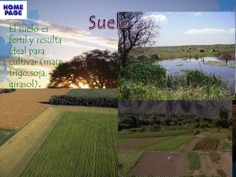 Suelo El suelo es fertil y resulta ideal para cultivar (maiz, trigo,soja, girasol).