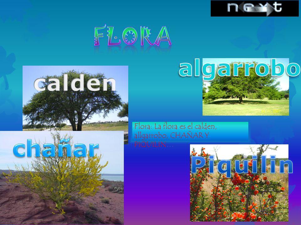 Flora algarrobo calden chañar Piquilin