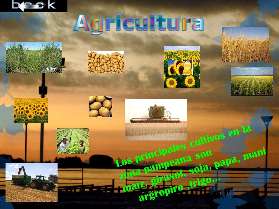 Agricultura Los principales cultivos en la zona pampeana son