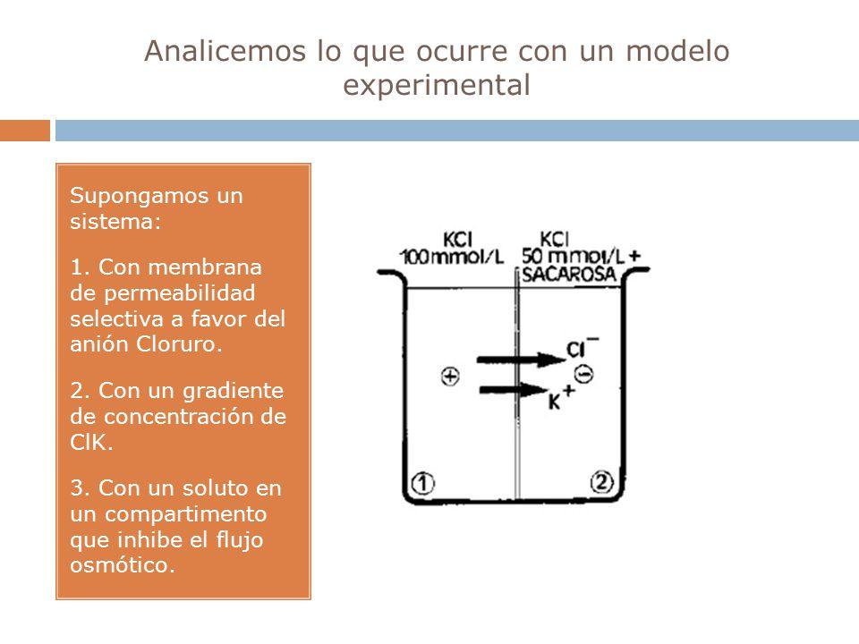 Analicemos lo que ocurre con un modelo experimental