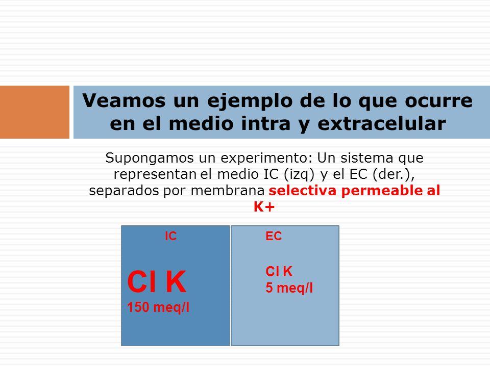 Veamos un ejemplo de lo que ocurre en el medio intra y extracelular