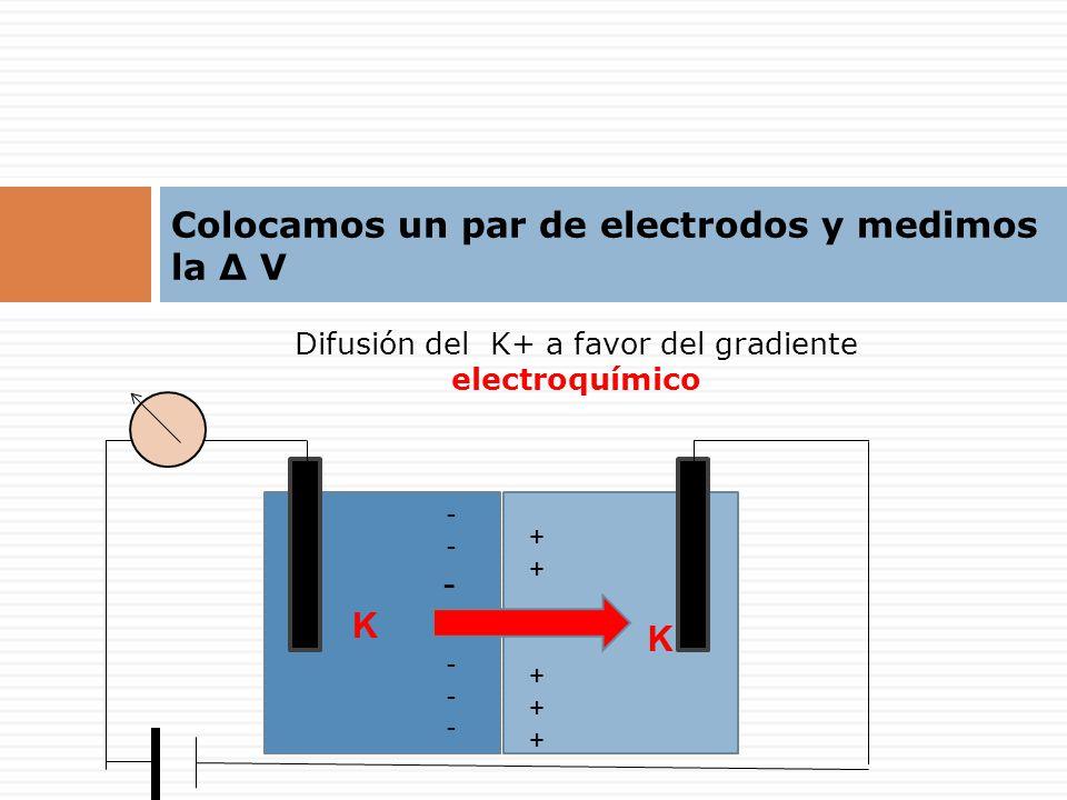 Colocamos un par de electrodos y medimos la Δ V