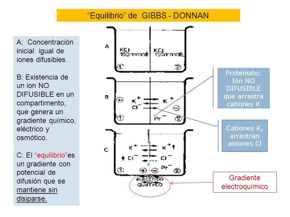 Equilibrio de GIBBS - DONNAN