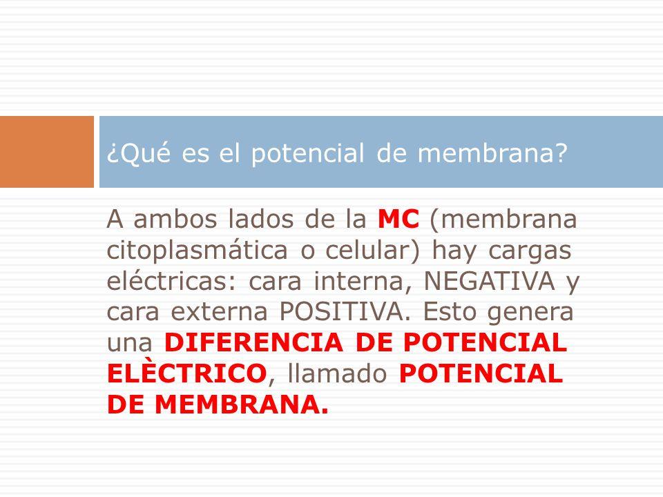 ¿Qué es el potencial de membrana