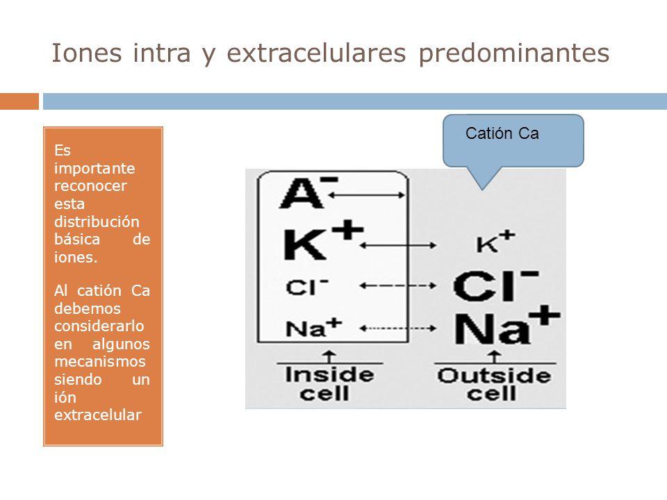 Iones intra y extracelulares predominantes