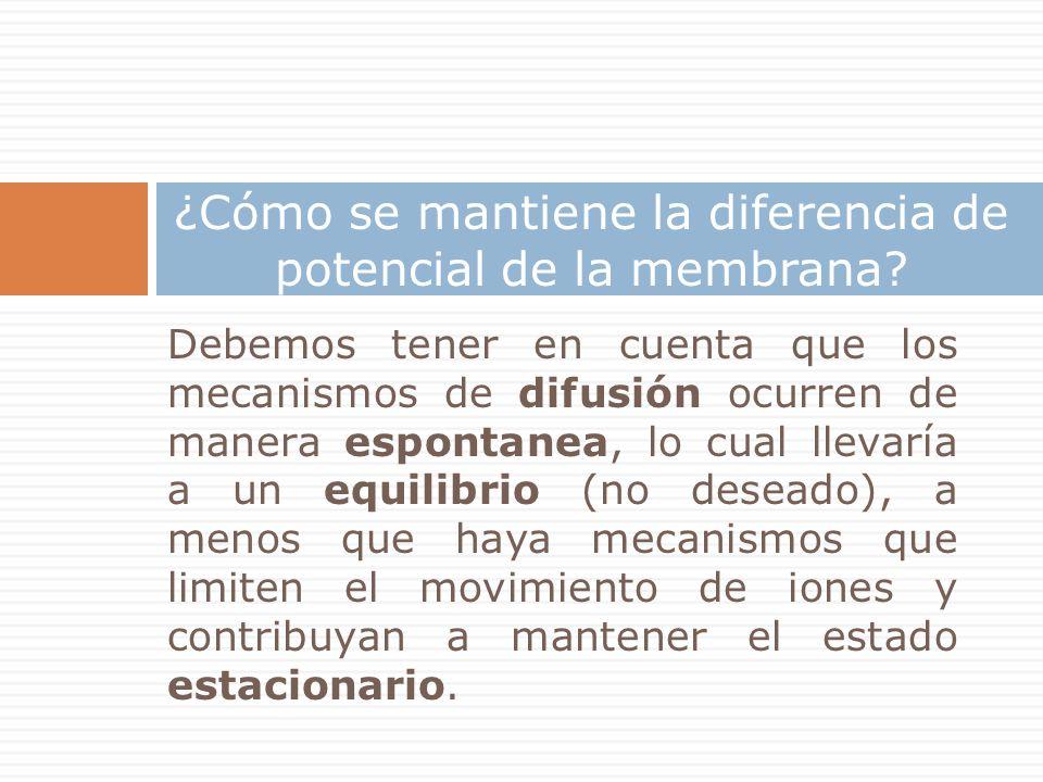 ¿Cómo se mantiene la diferencia de potencial de la membrana