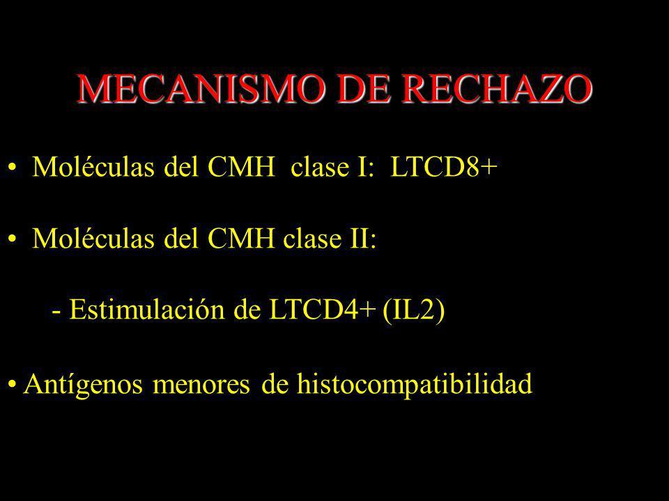 MECANISMO DE RECHAZO Moléculas del CMH clase I: LTCD8+