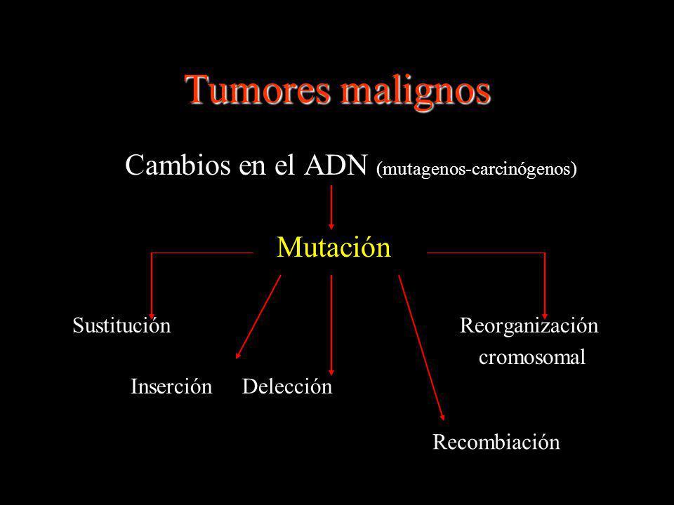 Tumores malignos Cambios en el ADN (mutagenos-carcinógenos)