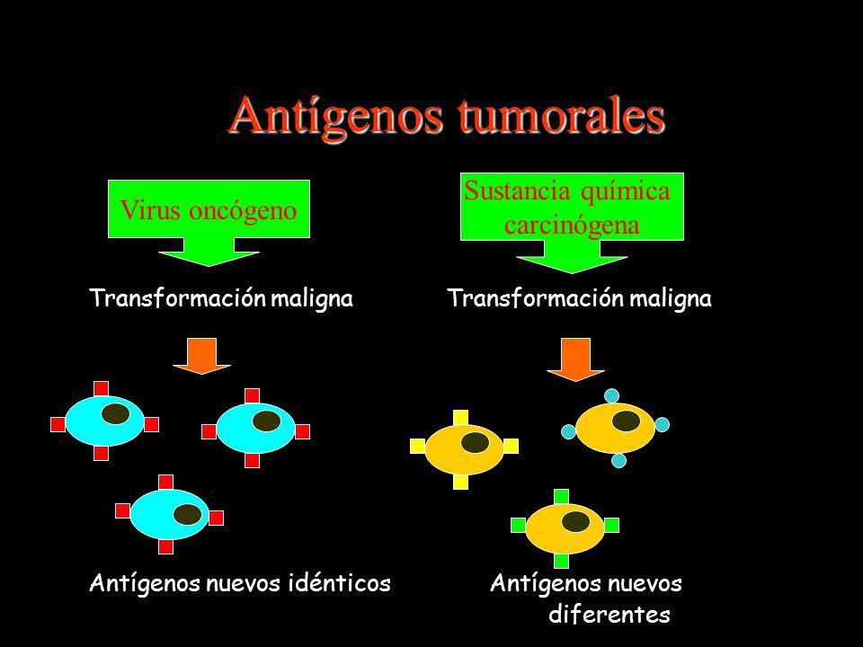 Antígenos tumorales Sustancia química Virus oncógeno carcinógena