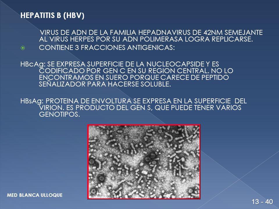 HEPATITIS B (HBV) VIRUS DE ADN DE LA FAMILIA HEPADNAVIRUS DE 42NM SEMEJANTE AL VIRUS HERPES POR SU ADN POLIMERASA LOGRA REPLICARSE.