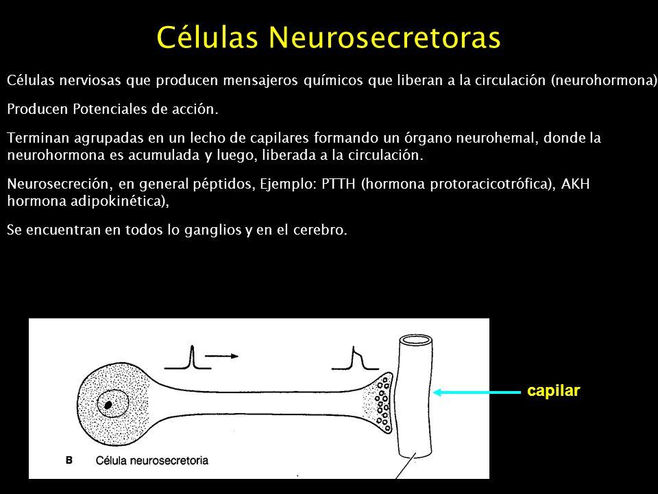 Células Neurosecretoras