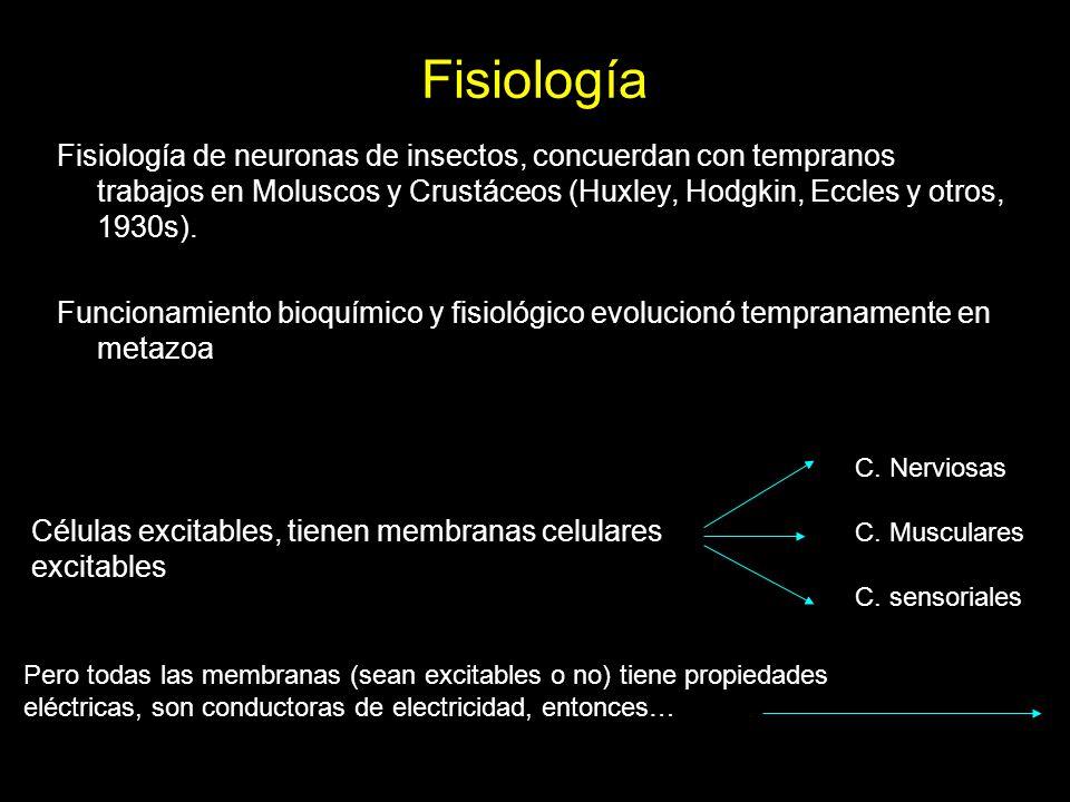 Fisiología Fisiología de neuronas de insectos, concuerdan con tempranos trabajos en Moluscos y Crustáceos (Huxley, Hodgkin, Eccles y otros, 1930s).