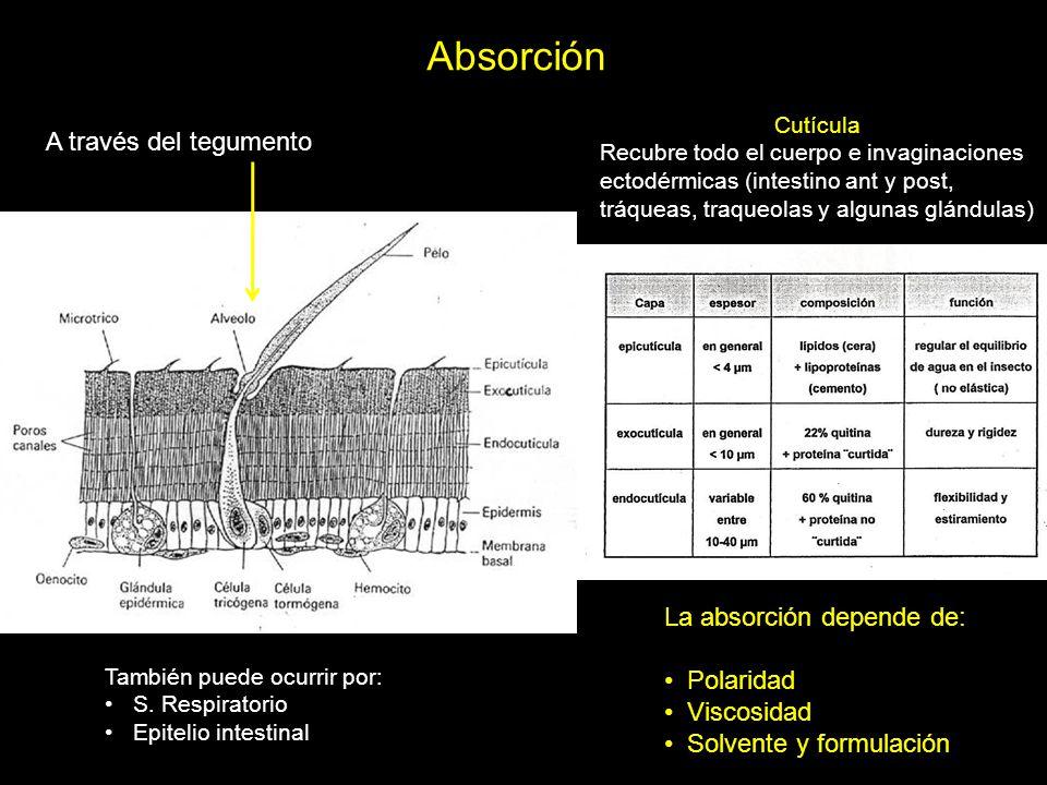 Absorción A través del tegumento La absorción depende de: Polaridad
