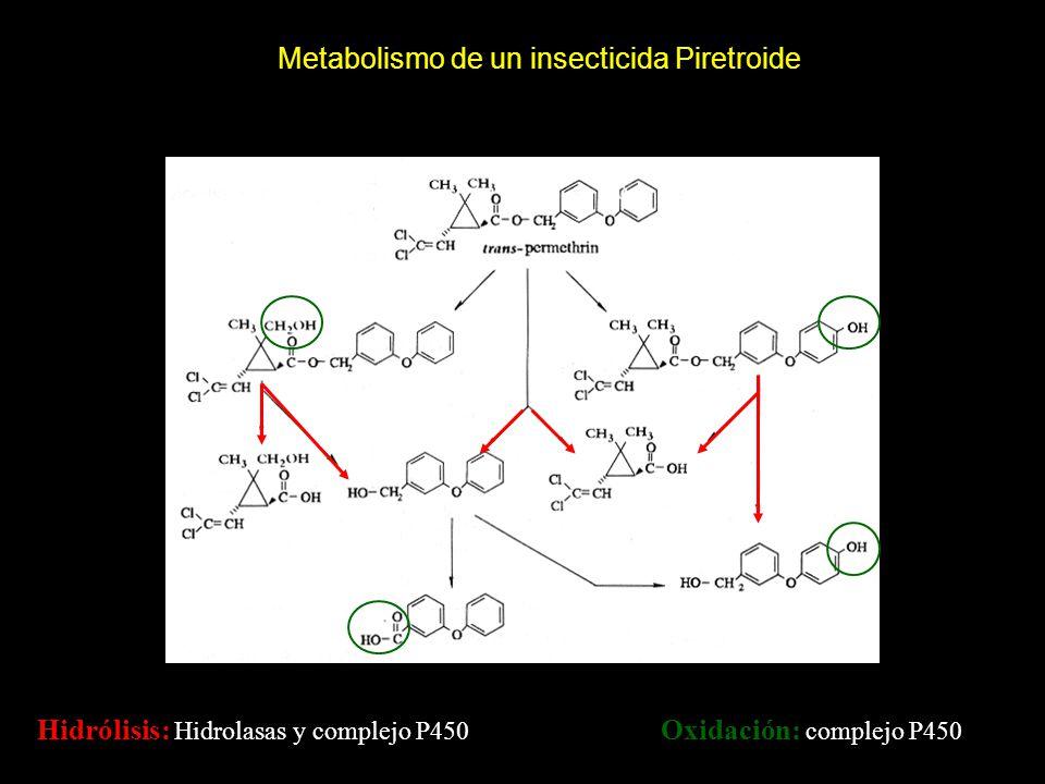 Metabolismo de un insecticida Piretroide