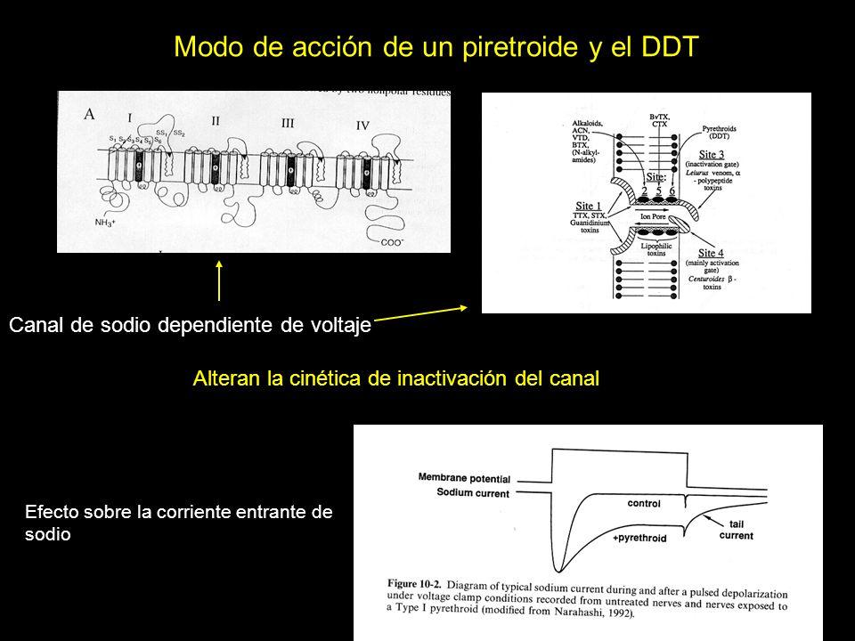 Modo de acción de un piretroide y el DDT