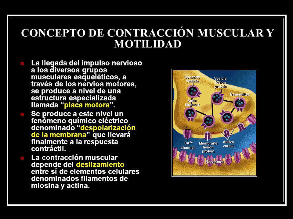 CONCEPTO DE CONTRACCIÓN MUSCULAR Y MOTILIDAD