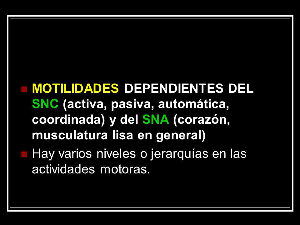 MOTILIDADES DEPENDIENTES DEL SNC (activa, pasiva, automática, coordinada) y del SNA (corazón, musculatura lisa en general)