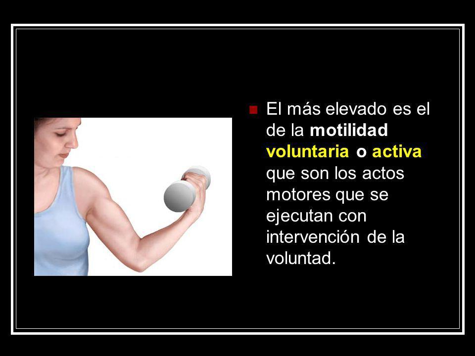 El más elevado es el de la motilidad voluntaria o activa que son los actos motores que se ejecutan con intervención de la voluntad.