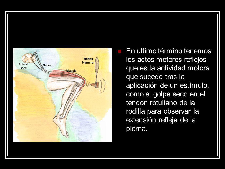 En último término tenemos los actos motores reflejos que es la actividad motora que sucede tras la aplicación de un estímulo, como el golpe seco en el tendón rotuliano de la rodilla para observar la extensión refleja de la pierna.