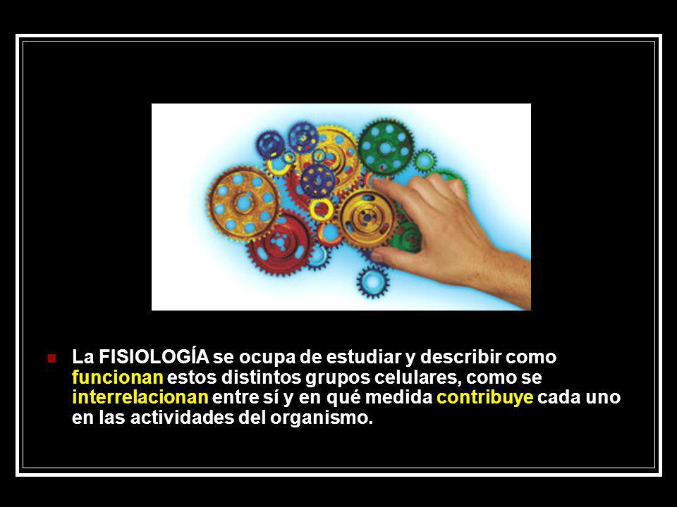 La FISIOLOGÍA se ocupa de estudiar y describir como funcionan estos distintos grupos celulares, como se interrelacionan entre sí y en qué medida contribuye cada uno en las actividades del organismo.