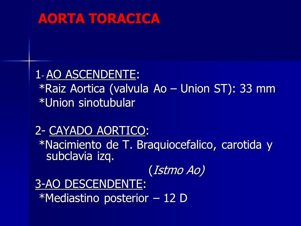 AORTA TORACICA 1- AO ASCENDENTE: