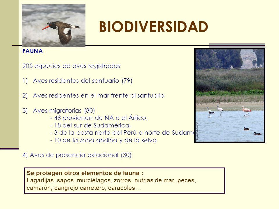 BIODIVERSIDAD FAUNA 205 especies de aves registradas