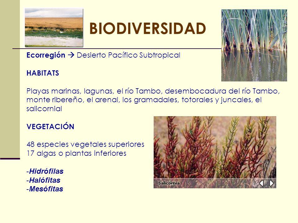 BIODIVERSIDAD Ecorregión  Desierto Pacífico Subtropical HABITATS