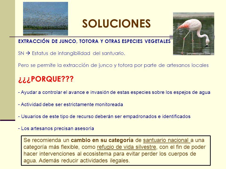 SOLUCIONESEXTRACCIÓN DE JUNCO, TOTORA Y OTRAS ESPECIES VEGETALES. SN  Estatus de intangibilidad del santuario.