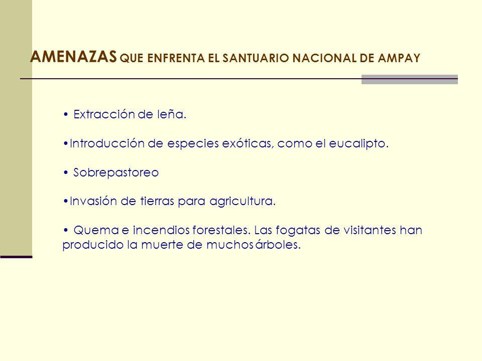 AMENAZAS QUE ENFRENTA EL SANTUARIO NACIONAL DE AMPAY