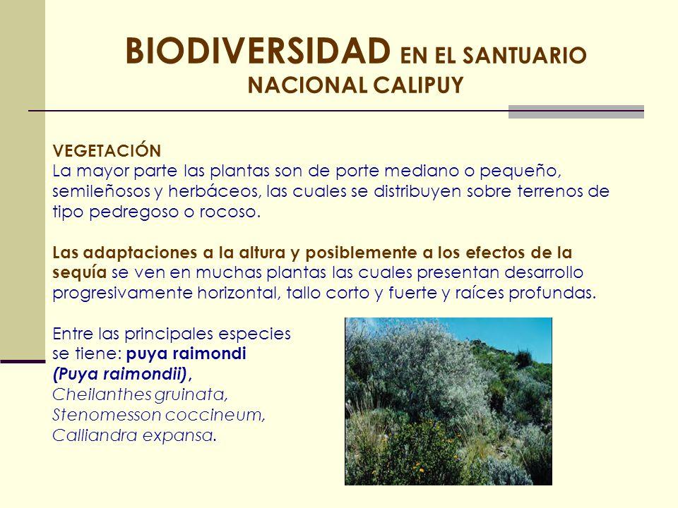 BIODIVERSIDAD EN EL SANTUARIO NACIONAL CALIPUY