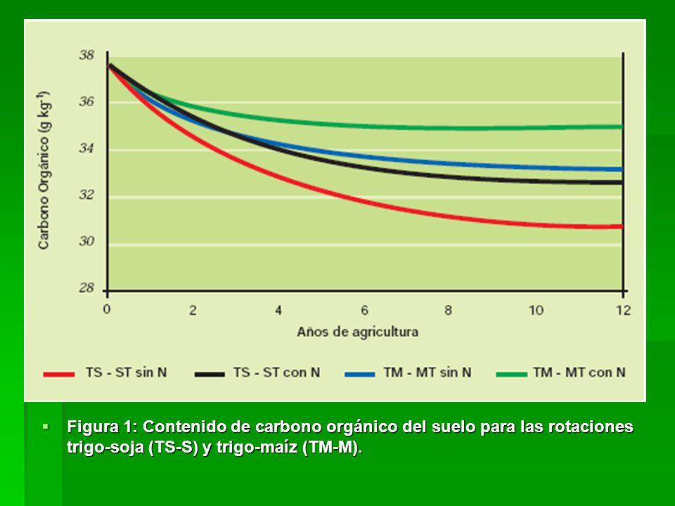 Figura 1: Contenido de carbono orgánico del suelo para las rotaciones trigo-soja (TS-S) y trigo-maíz (TM-M).