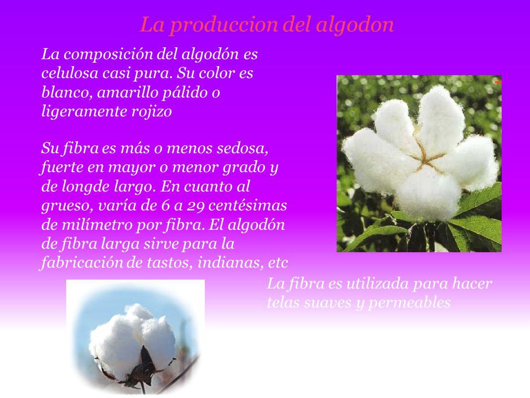 La produccion del algodon